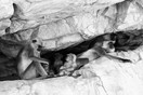 Langur family resting in a cave, Ranthambore NP