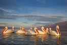Group of pelicans in the first rays of sun